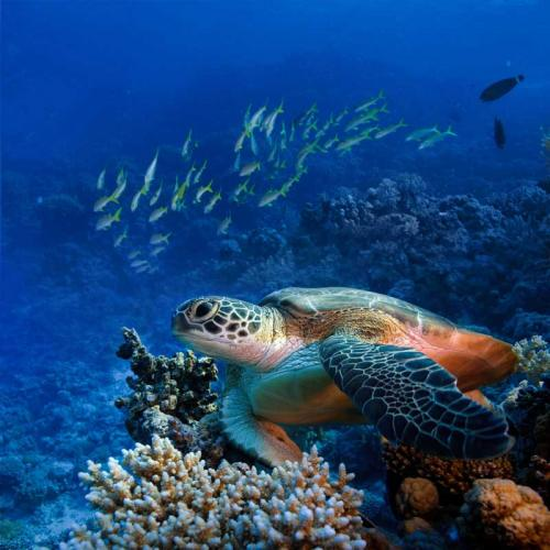getting-started-with-underwater-photography